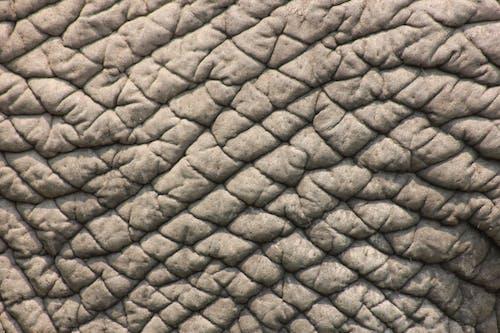 Close Up of Elephant Skin