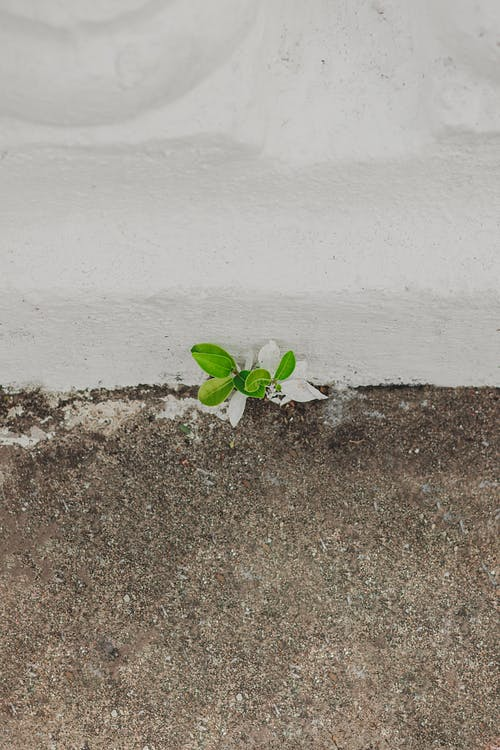 Small and tiny green plant unexpectedly growing between white stone wall and ground