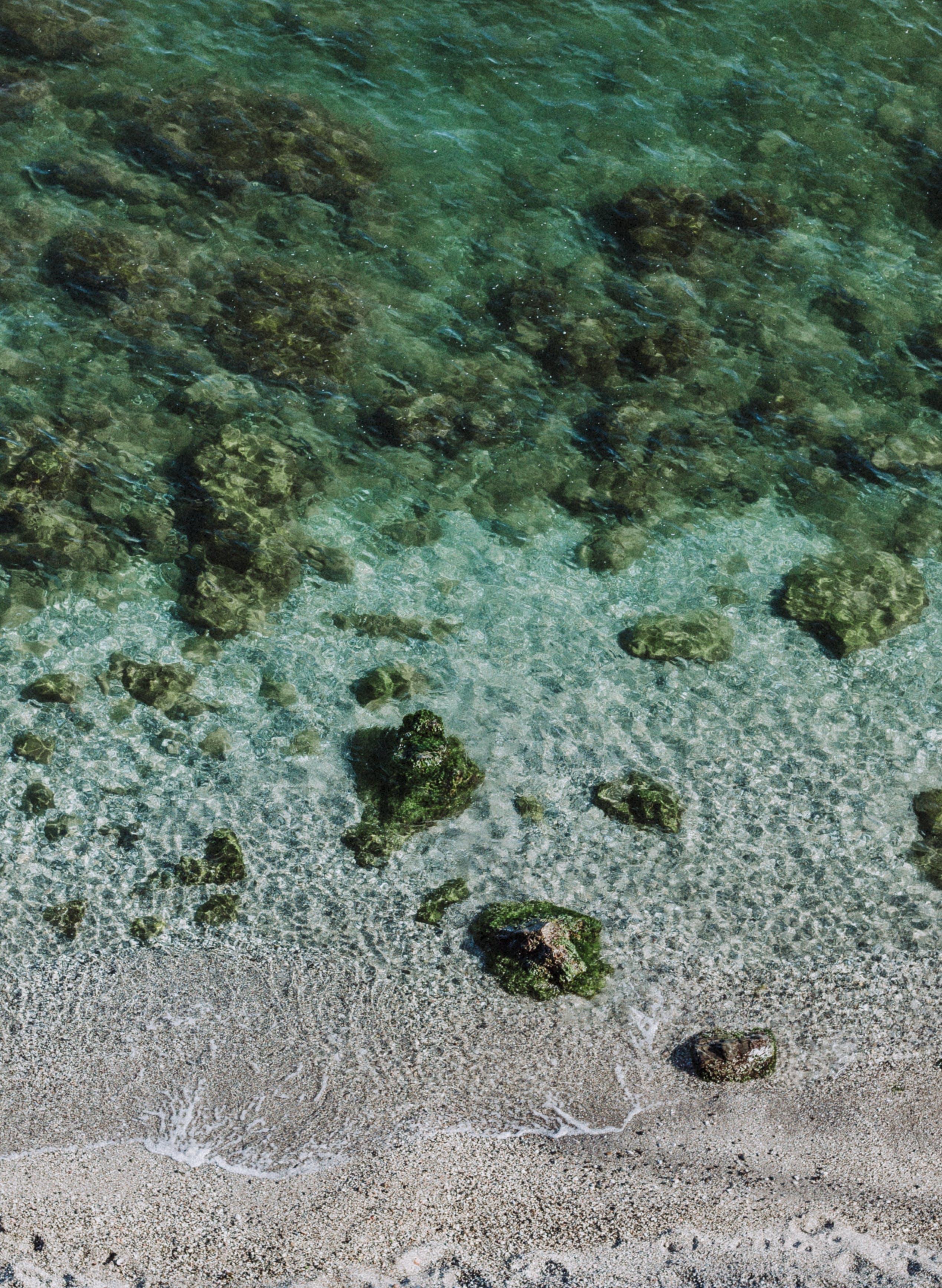 Kostenloses Stock Foto zu felsen, klar, korallen, meer
