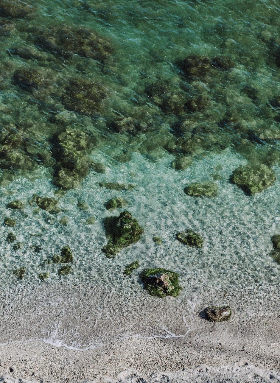 aquatic, clear, corals