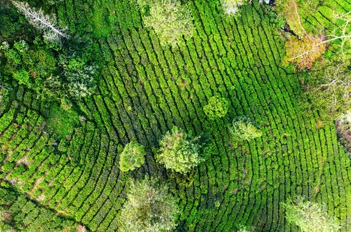 Green plantations and trees placed in countryside