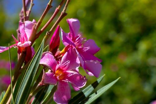 Gratis lagerfoto af blomst, blomst tapet, Canon, foto
