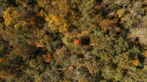 Aerial top view of deciduous trees growing in thick woodland on early autumn weather