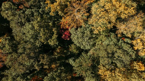 Aerial view of thick deciduous woodland with tall yellow and green trees in daylight