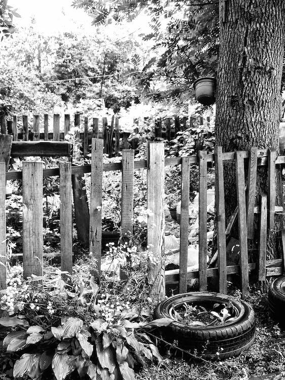Free stock photo of black and white, природа, черно-белое