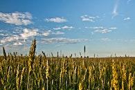 sky, cloudy, field
