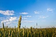 landscape, field, summer