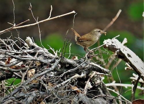 Free stock photo of bird, bird eats caterpillar, undergrowth