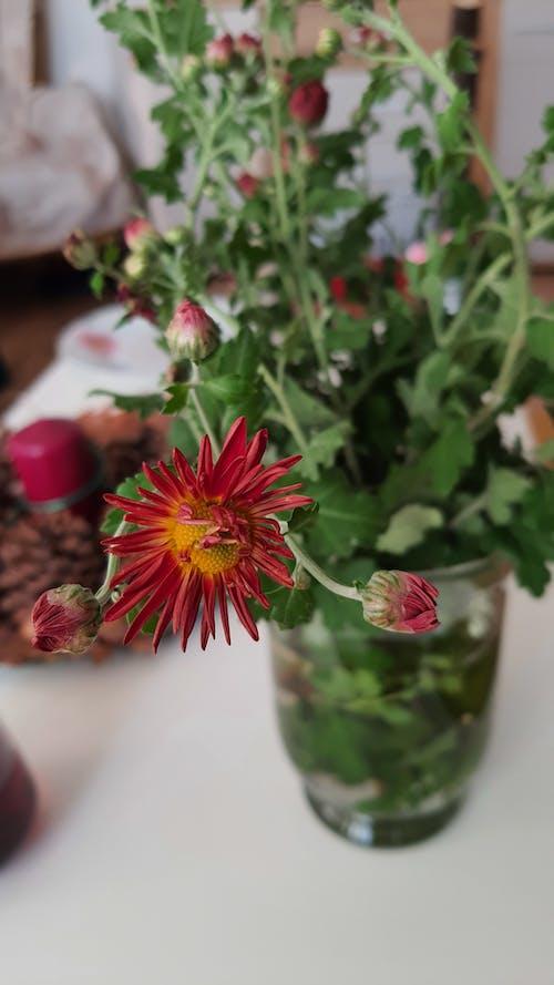 #紅色#花#家 的 免費圖庫相片