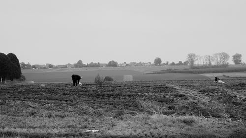 Grayscale Photo of Horse on Grass Field