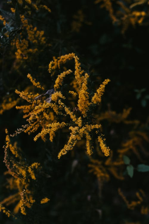 Top view delicate goldenrod plant growing in lush verdant woodland on clear day