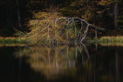 Gratis lagerfoto af blad, efterår, falde, farve