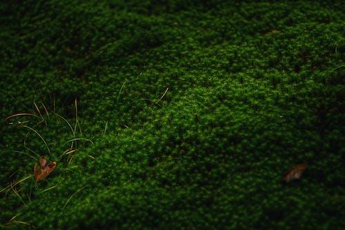 Gratis lagerfoto af abstrakt, agerjord, blad, blomst