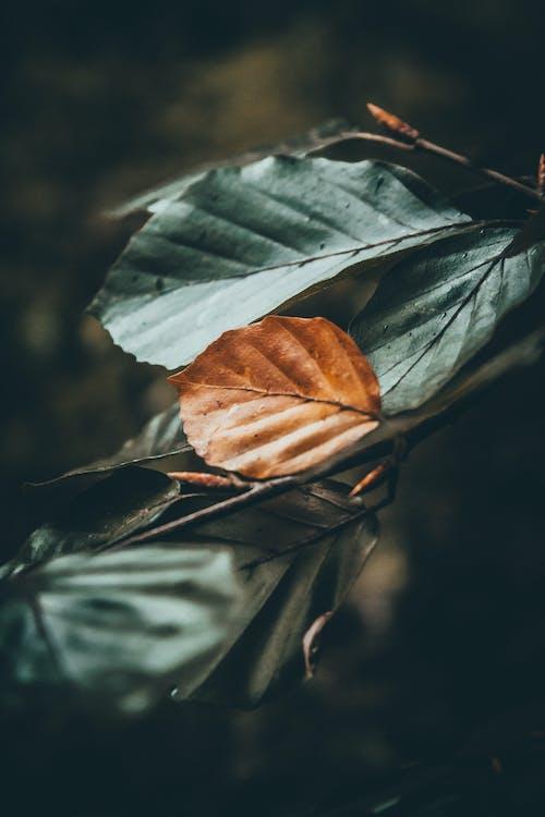 Бесплатное стоковое фото с красивая природа, лес, облачный лес, темно-зеленый
