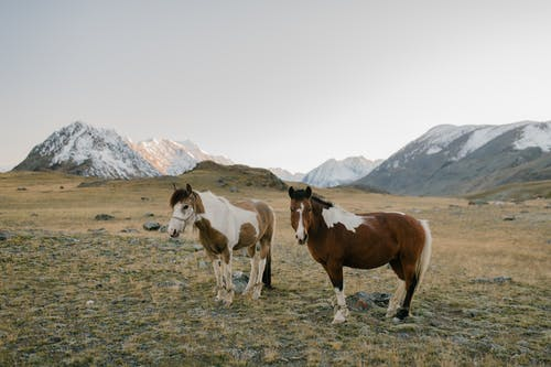 Brown and White Horses on Green Grass Field