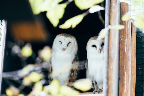 Photo Of Owls