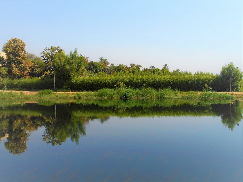 Free stock photo of green, nature park, reflection