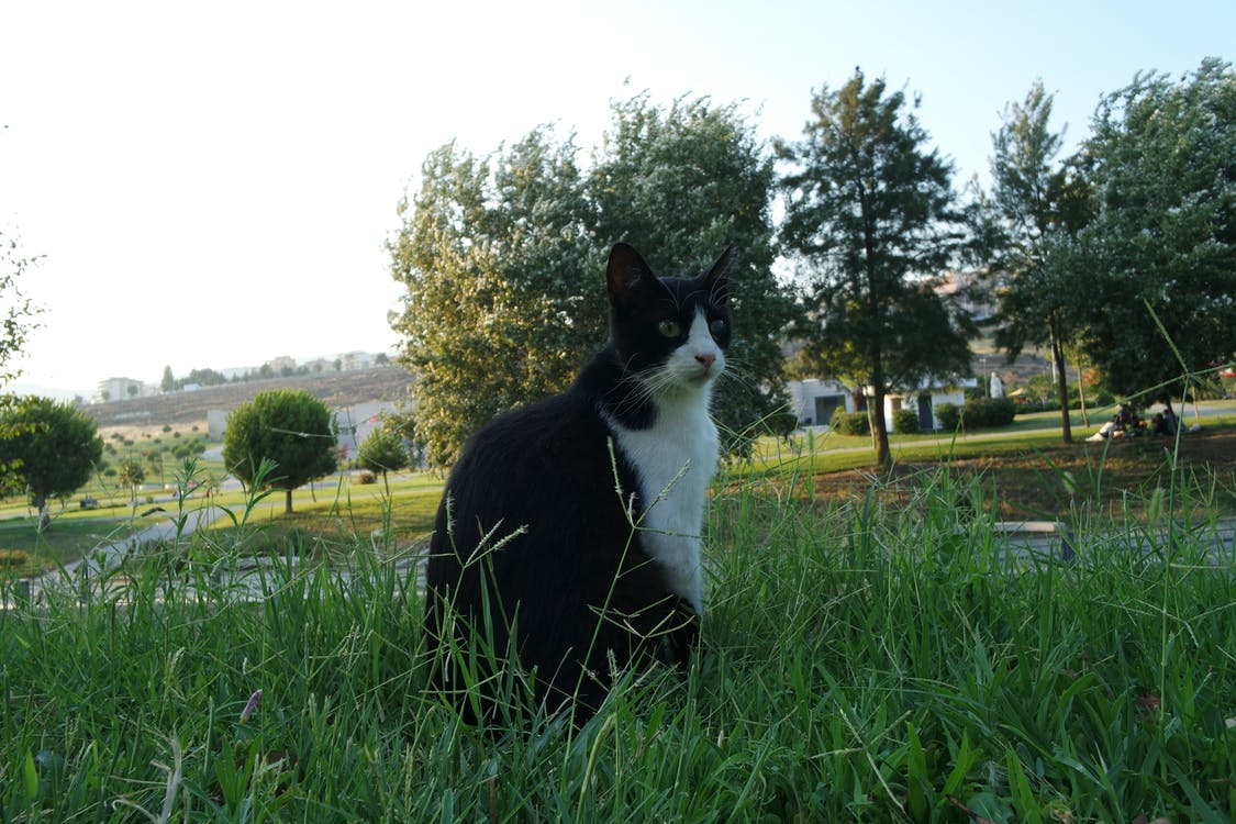Free stock photo of cat, cats, grass