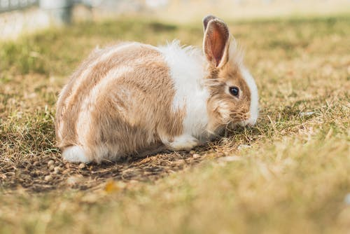 A Cute Rabbit on the Grass