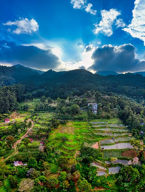 Green rice terraces in green valley of mountains