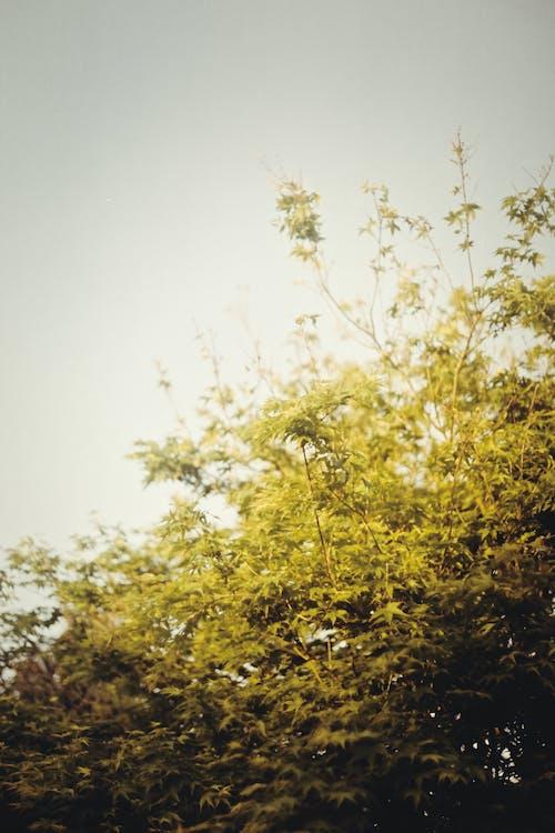 Free stock photo of bright, dark, film