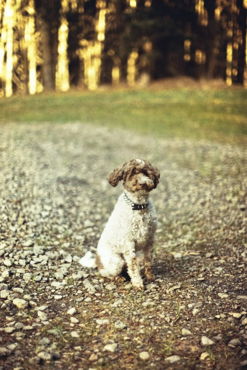 Free stock photo of bright, dark, dog