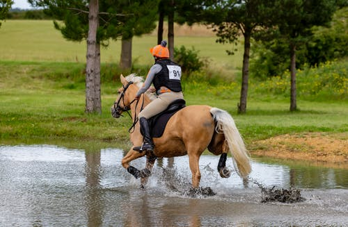 Man in Black and White Vest Riding Brown Horse on Water