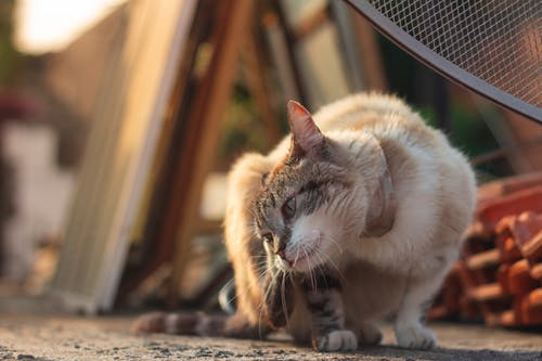 가족, 거리, 고양이, 귀여운의 무료 스톡 사진
