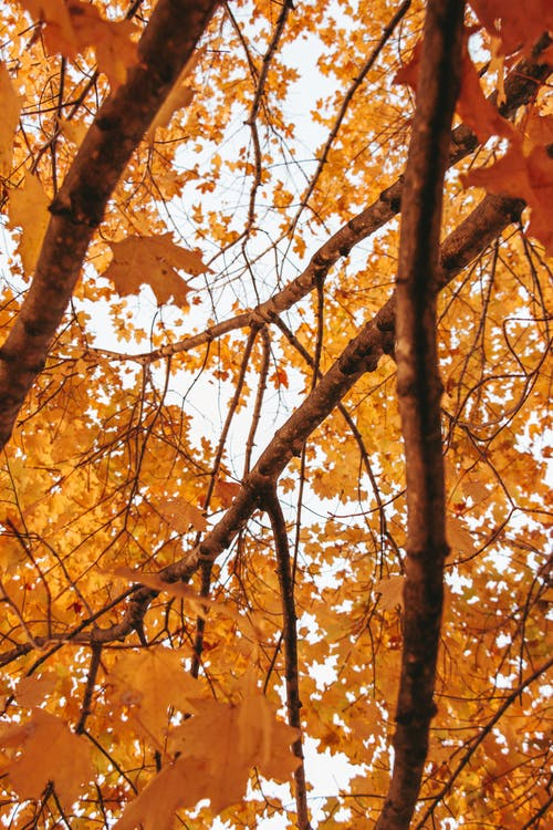 Brown Tree With Yellow Leaves
