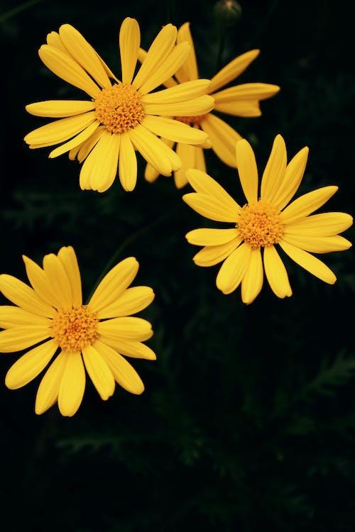 Бесплатное стоковое фото с лепесток, лето, лист