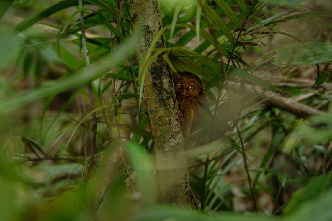 Immagine gratuita di albero, animale, biologia