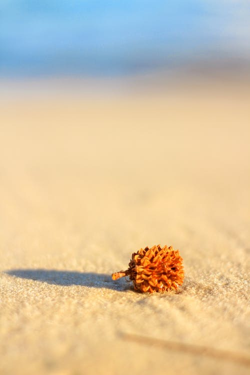 Brown Plant on White Sand