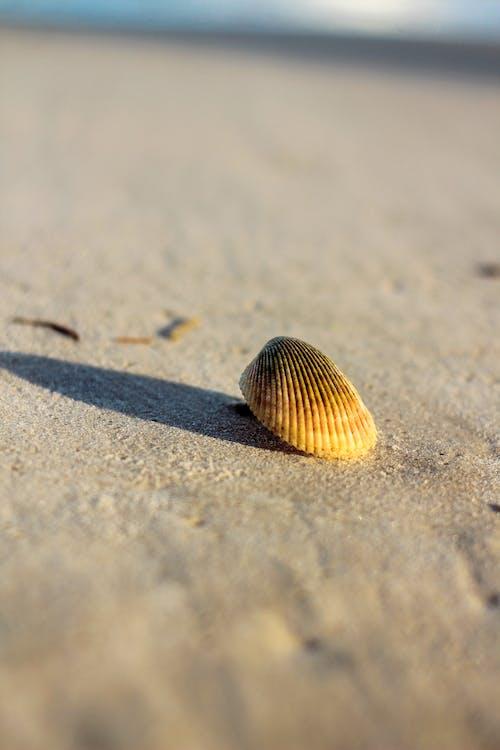 Free stock photo of at the beach, beach island