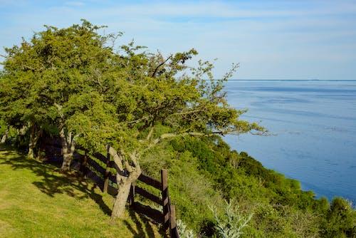 Grassy hilly seashore beneath peaceful blue sky