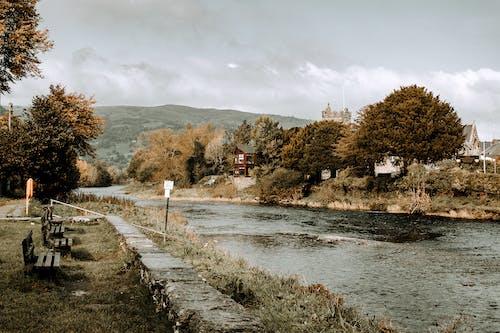 Immagine gratuita di acqua, alba, albero, cadere