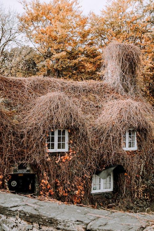 Immagine gratuita di albero, autunno, cadere, casa