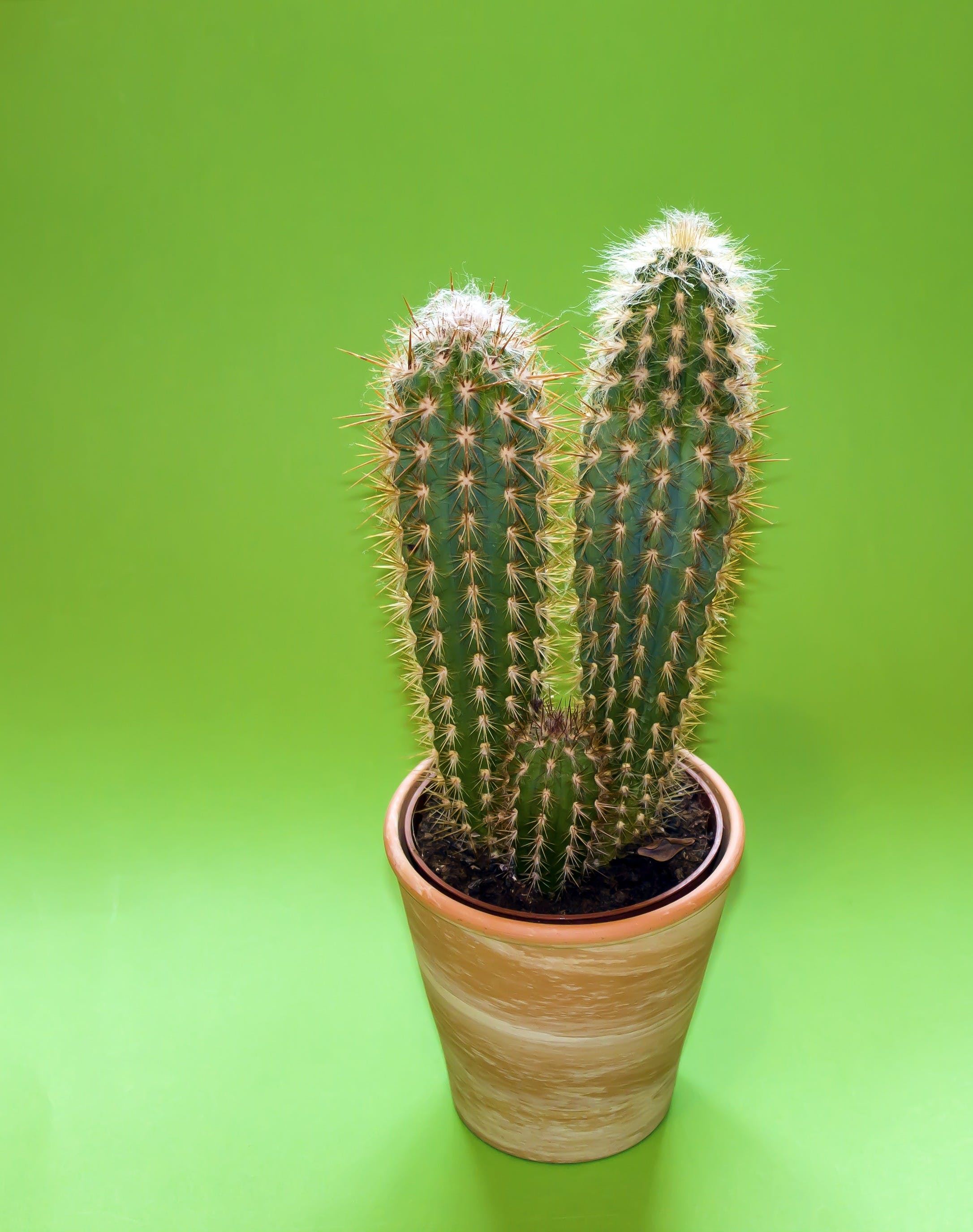 Cactus Plant on Brown Pot