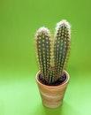 plant, pot, green