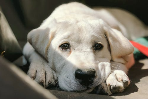 Adorable puppy lying on seat under sunlight