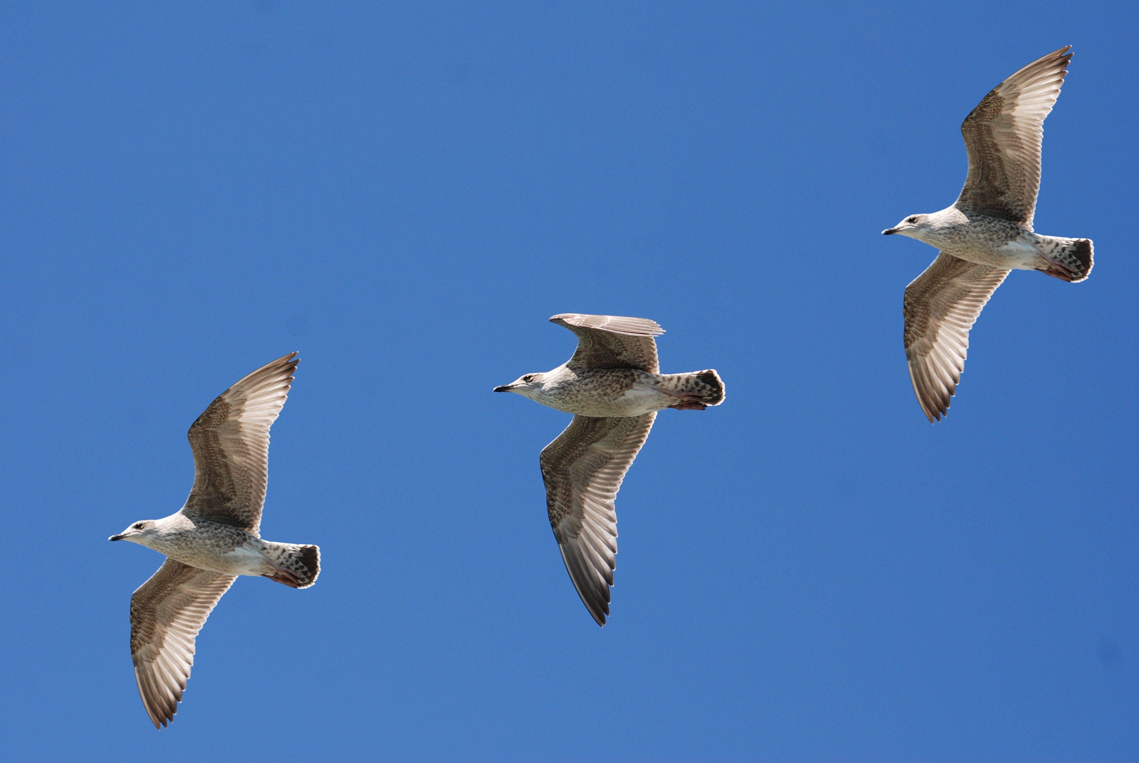 Fotos de stock gratuitas de alas, cielo, naturaleza, pluma