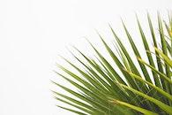nature, plant, blur