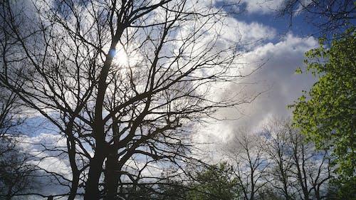 Kostnadsfri bild av blå himmel, moln, natur, solljus