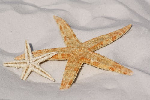White and Orange Star Fish Side by Side at the Sand