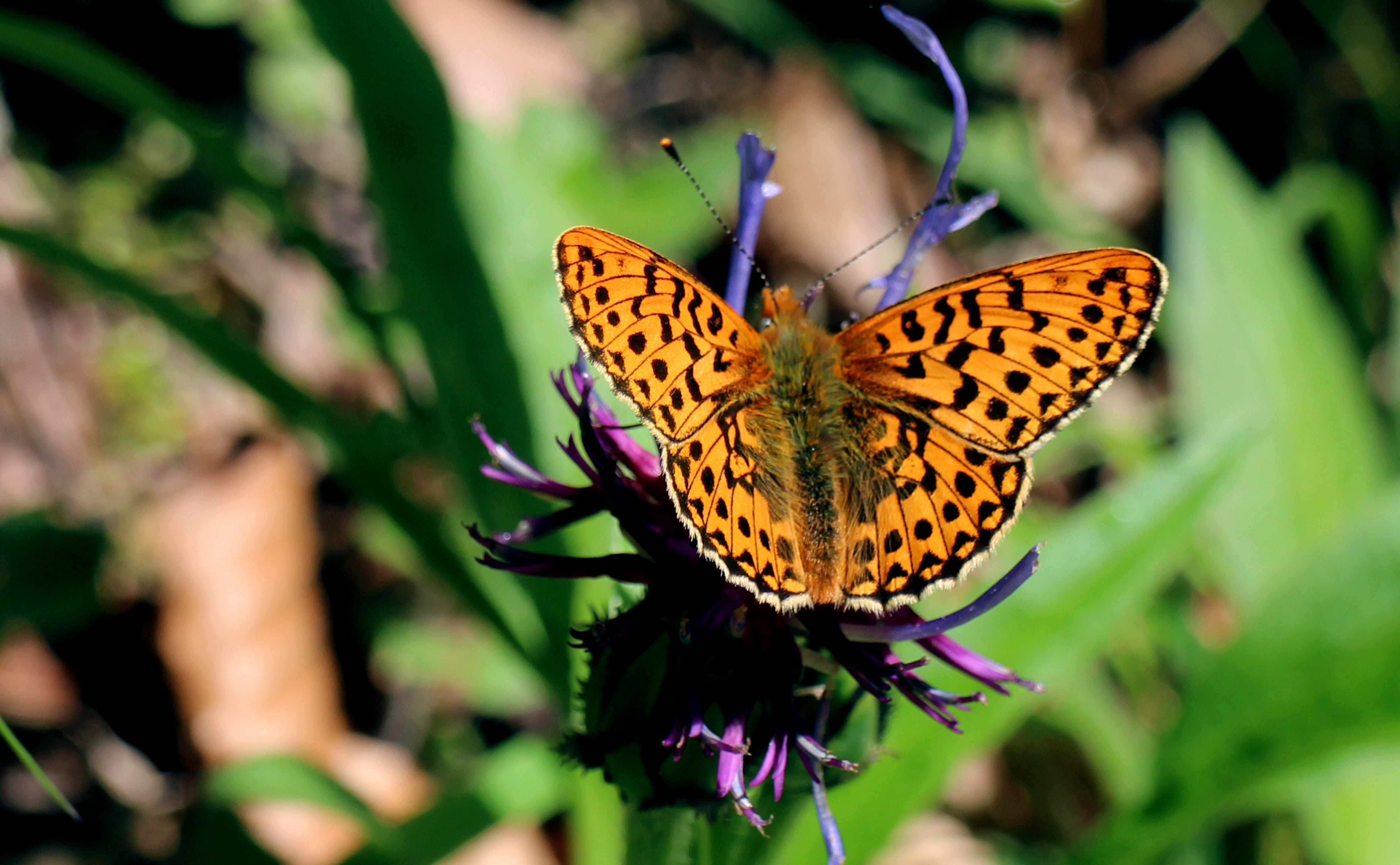 Yellow and Black Butterfly on Purple Flower at Daytime
