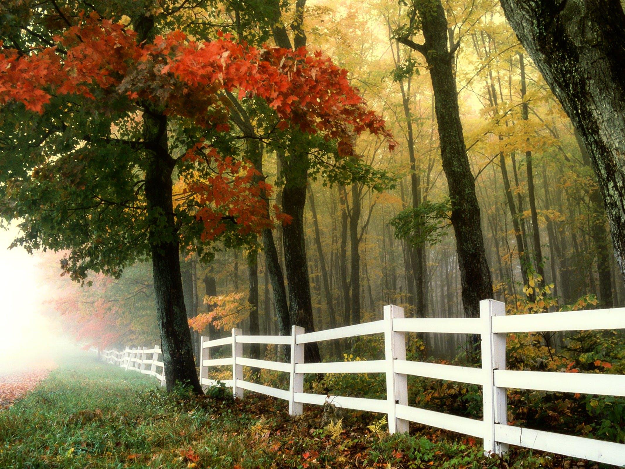 Foto profissional grátis de árvores, cênico, cerca, de manhã cedo