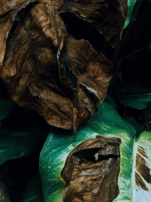 Základová fotografie zdarma na téma abstraktní, botanická zahrada, cestování, dřevo