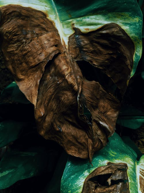 Základová fotografie zdarma na téma barva, důl, jeskyně, kámen