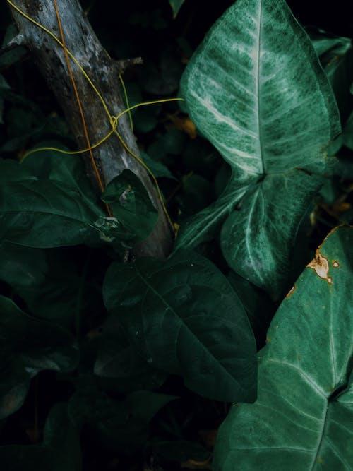 Základová fotografie zdarma na téma abstraktní, barva, biologie, břečťan