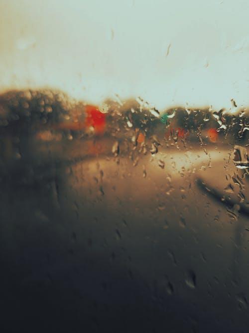 Základová fotografie zdarma na téma akce, bezobratlí, denní světlo, déšť