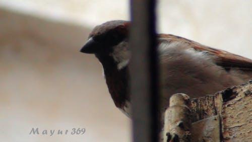 Free stock photo of sharp, sparrow